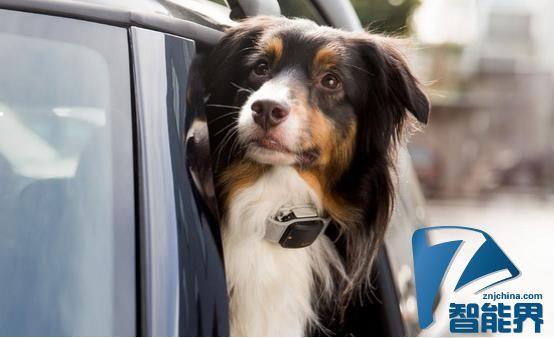 这些高科技方法能帮你找到走失的宠物