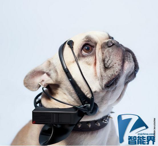 给狗狗配备的科技小工具 竟然还有翻译机
