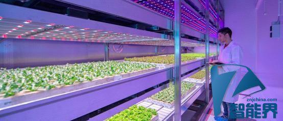 装个LED光源 轻松在家种菜