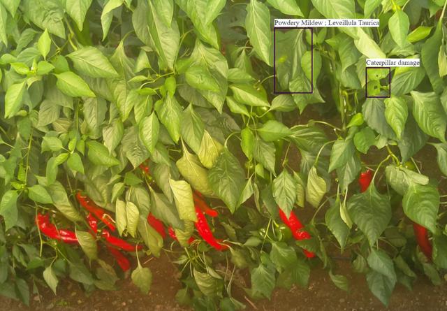 种菜都要动用人工智能 据说精确到每一片叶子