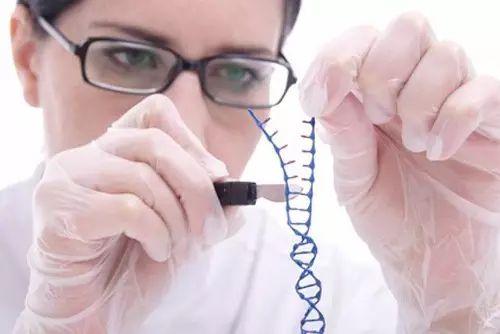 潘多拉魔盒?美国打算解禁人兽杂交胚胎研究