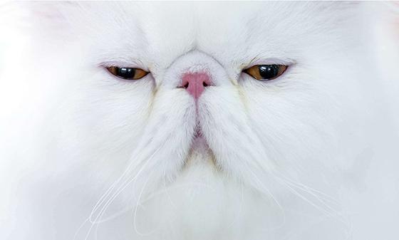 猫才有九命 苹果7居然有七命