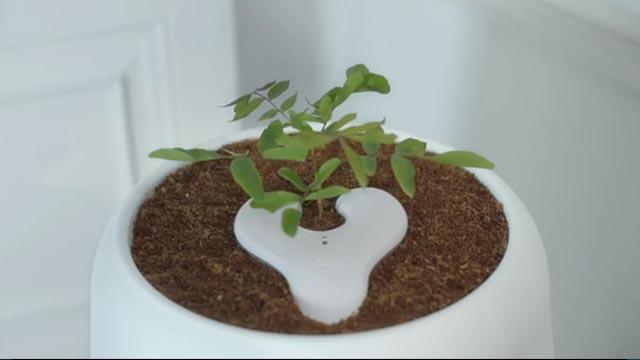 惊!还有这种操作 将绿植种在骨灰盒上